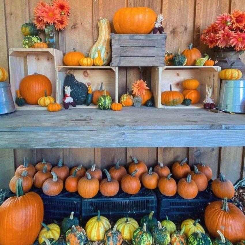 Bramhalls pumpkins