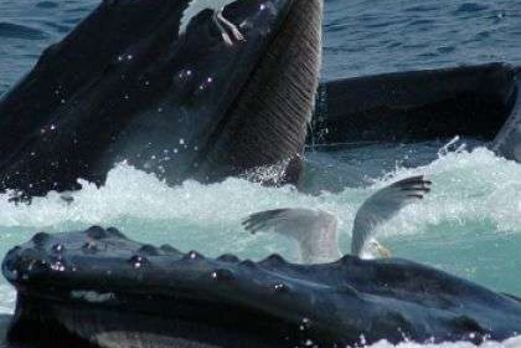 Captain John whale watch