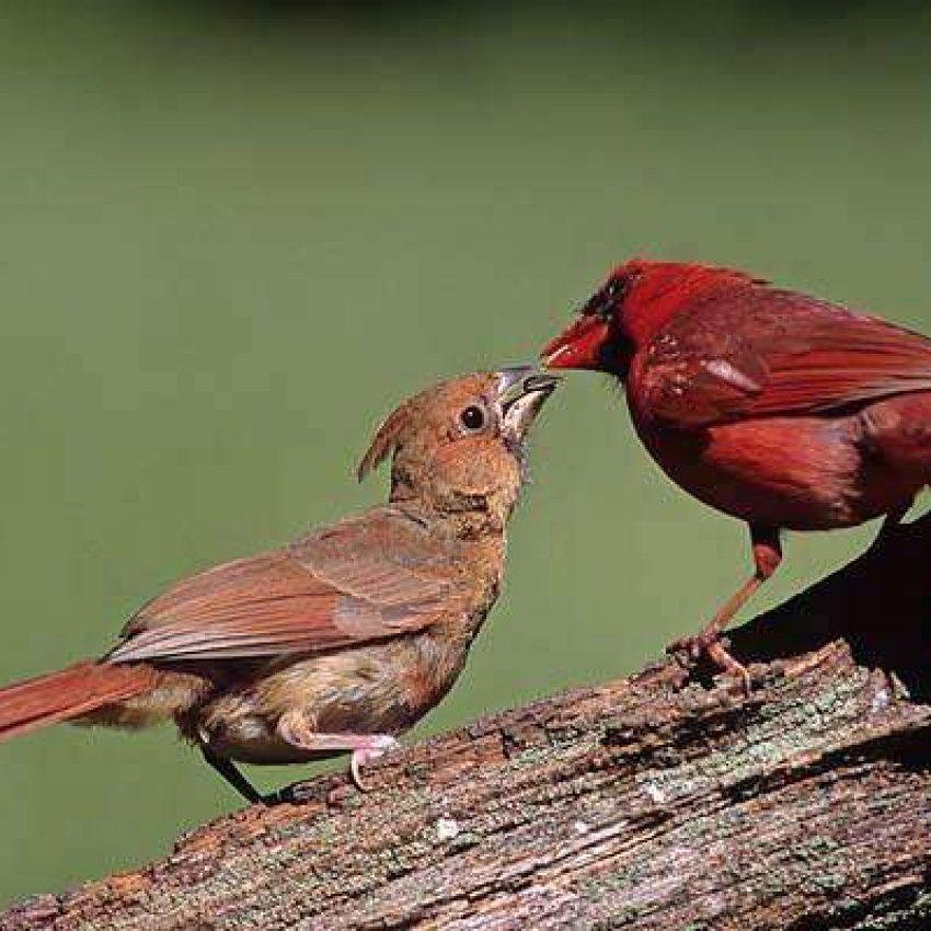North River Sanctuary MA Audubon