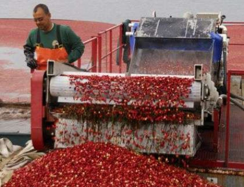 MASSACHUSETTS CRANBERRY BOG TOURS