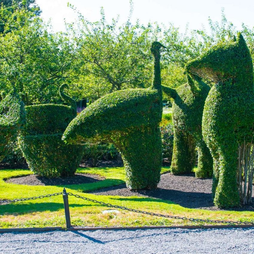 Newport Mansions topiary animals Gardens