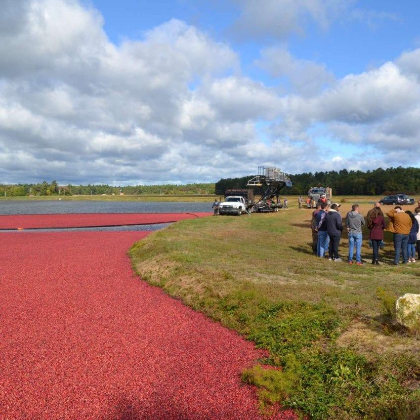 Cranberry Harvest virtual Tour