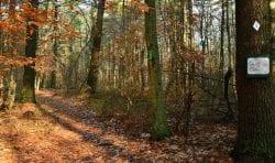 NSRWA autumn walk