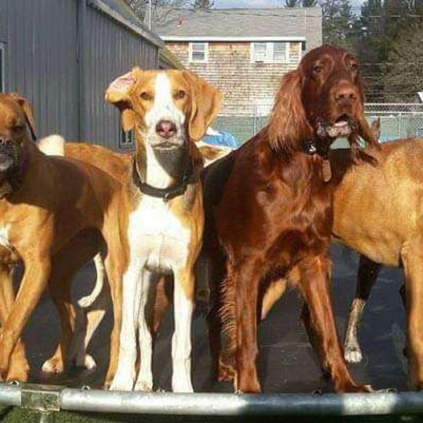 Pet Recess dogs