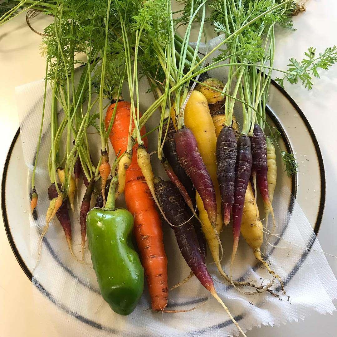Plymouth Public Library garden vegetables