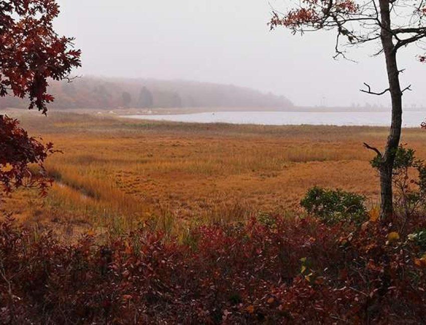 Mass Audubon Great Neck Wildlife Sanctuary
