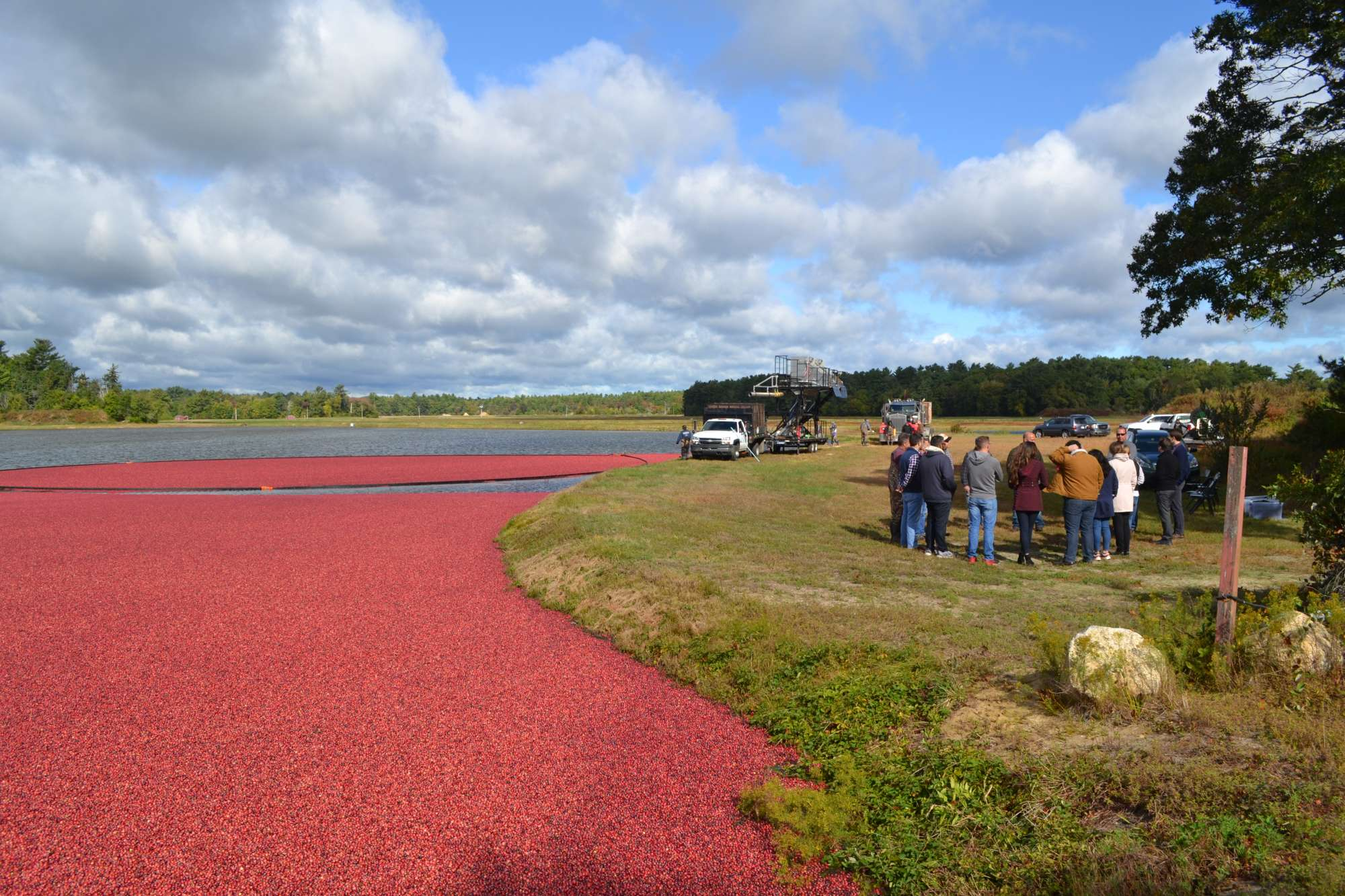Cape Cod Cranberry Growers
